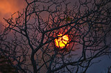 Haunting sunset behind a leafless tree