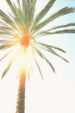palm tree  and sunshine