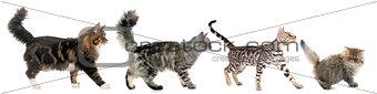 four walking cats