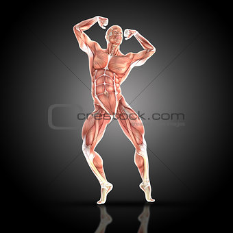 3D render of a medical figure with muscle map in bodybuilding po