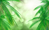 3D palm tree leaves against a defocussed background