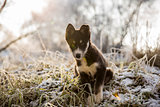 Curious puppy is seating on the snow-covered grass