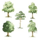 Types of trees.