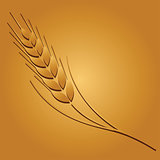 Wheat image. Vector illustration