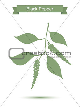 Black pepper branch. Green silhouette of pepper