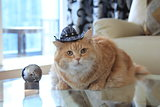 Cookie cat with cowboy hat