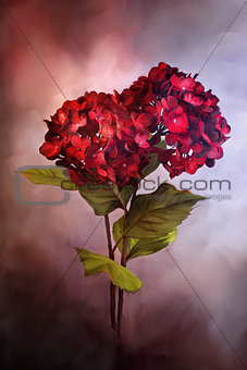 Painted Red Hydrangeas