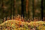 Moss hair