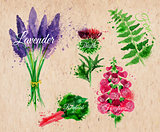 Flower grass lavender, thistle, foxgloves, kraft