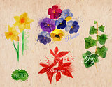 Flower grass daffodils, pansies, ivy, kraft