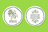 Ayurvedic Herb - Product Label with Sambucus
