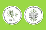 Ayurvedic Herb - Product Label wit Boswellia