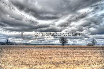 Three oak among a field in early spring