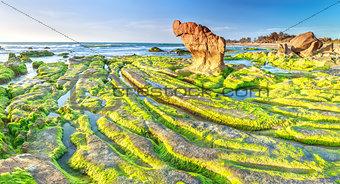 Beauty ancient stone mossy