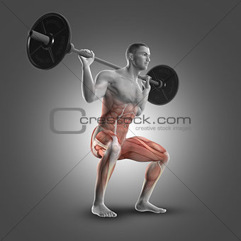 3D male figure in barbell squat