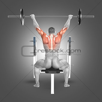 3D male figure in seated barbell press with arms raised