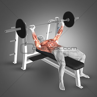 3D male figure in barbell bench press pose