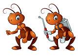 Cute little ant