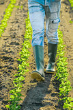 Unrecognizable male farmer walking through soybean plants rows
