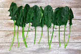 raw spinach on a rustic white table