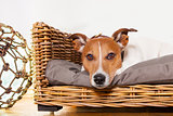 dog relaxing in his bed place