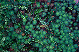 Emerald cosmos of moss