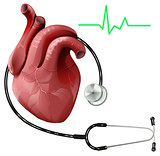 Realistic human heart and stethoscope