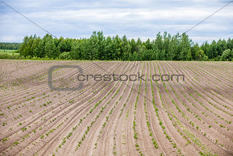 Country farm landscape - plowed field and trees. Agriculture beginning of spring.