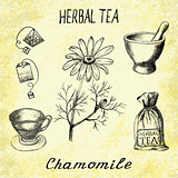 Chamomile herbal tea. Set of vector elements on the basis hand pencil drawings.