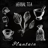 Plantain herbal tea. Chalk board set of vector elements