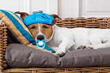 sick ill dog with fever