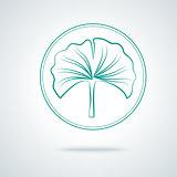 Ginkgo biloba plant.