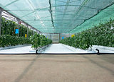 Inside Hydroponic Hothouse