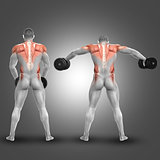 3D male figure doing dumbbell standing lateral raise