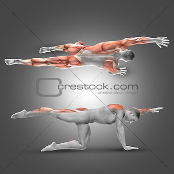 3D male figure in alternate arm/leg raise pose