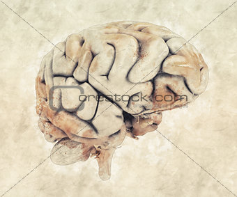 Abstract sketched design of a human brain