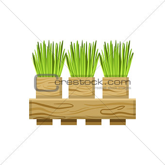 Green Onions In Crate