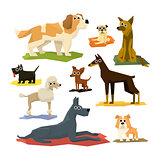 Different Dog Breeds Collection