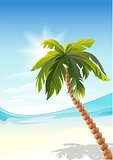 Palm tree on beach. White Sand beach