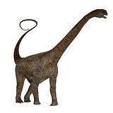 Malawisaurus Dinosaur on White