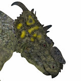 Pachyrhinosaurus Dinosaur Head