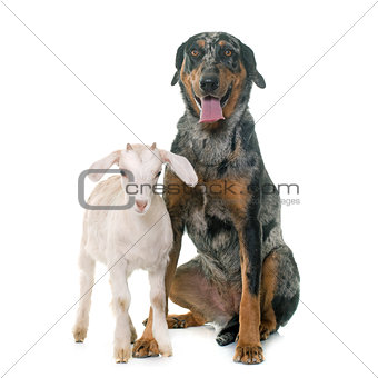 beauceron and kid