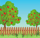 Rural landscape with apple tree