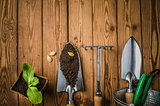 Still-life with sprouts and the garden tool