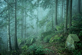 landscape of misty wood in mountains