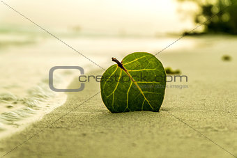 Green leaf on the beach