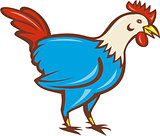Chicken Rooster Side Cartoon