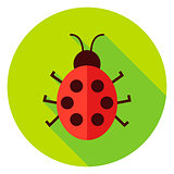 Ladybug Insect Circle Icon