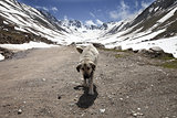 Dog on dirt road in spring mountains
