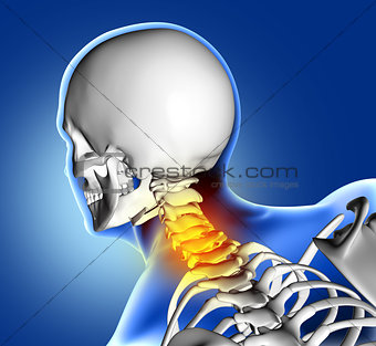 3D medical image of neck bone